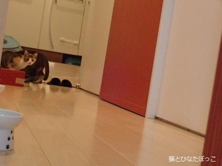 yuzu0.jpg