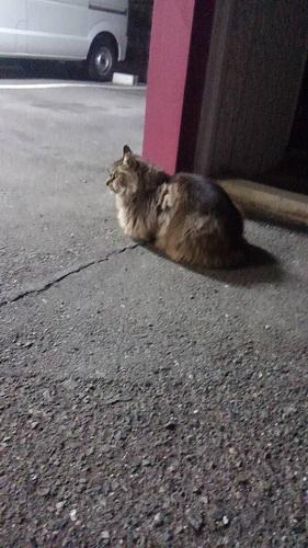0216猫2