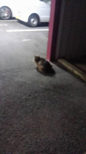 0216猫3