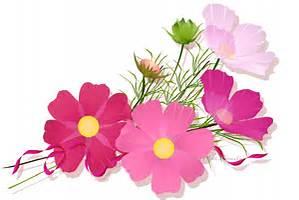 お大事にね コスモスの花束