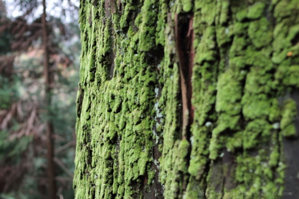 苔むした巨木ーS-N