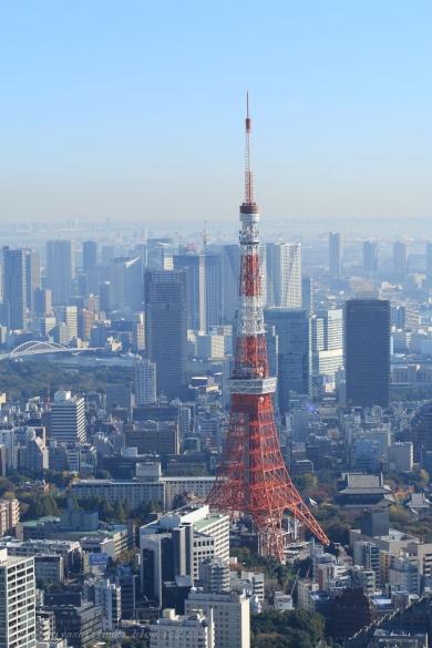 東京タワーと増上寺-SN