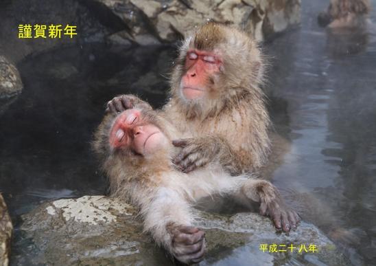 IMG_4597猿年賀_edited-2