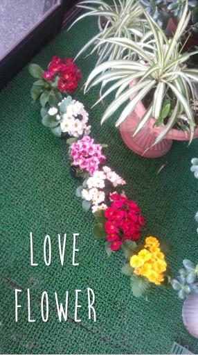 お花プレゼント