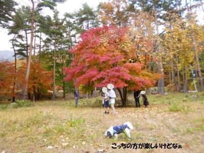 河口湖紅葉まつり2015