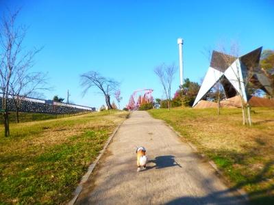 狭山公園2015秋