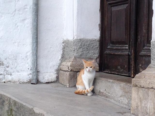 ジロカストラ猫1