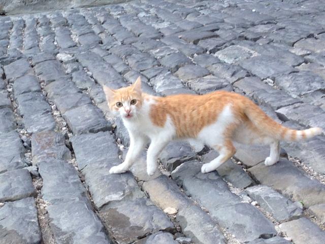 ジロカストラ猫2