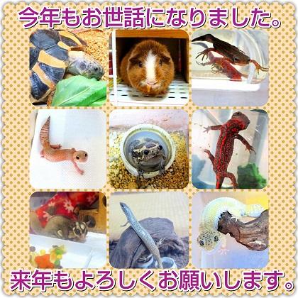 IMG_aisatsu2015.jpeg