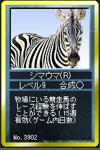 シマウマ(R)