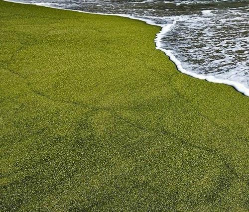 グリーンサンドビーチ
