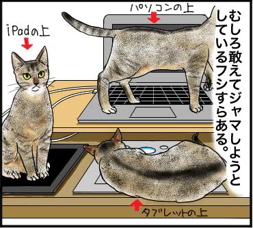 猫の所業2
