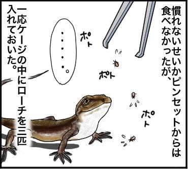 ローチ脱走2