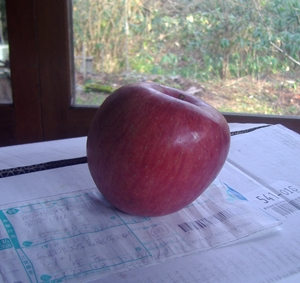 リンゴ2015-2