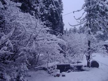 2916-2雪