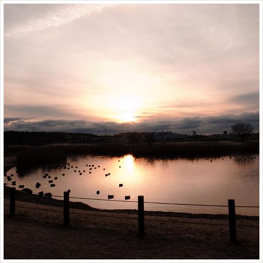 飛行機公園の鳥の池~♪