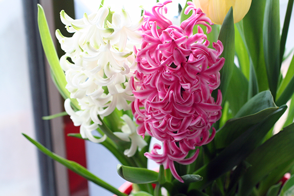 ヒヤシンス 花言葉「悲しみを超えた愛」