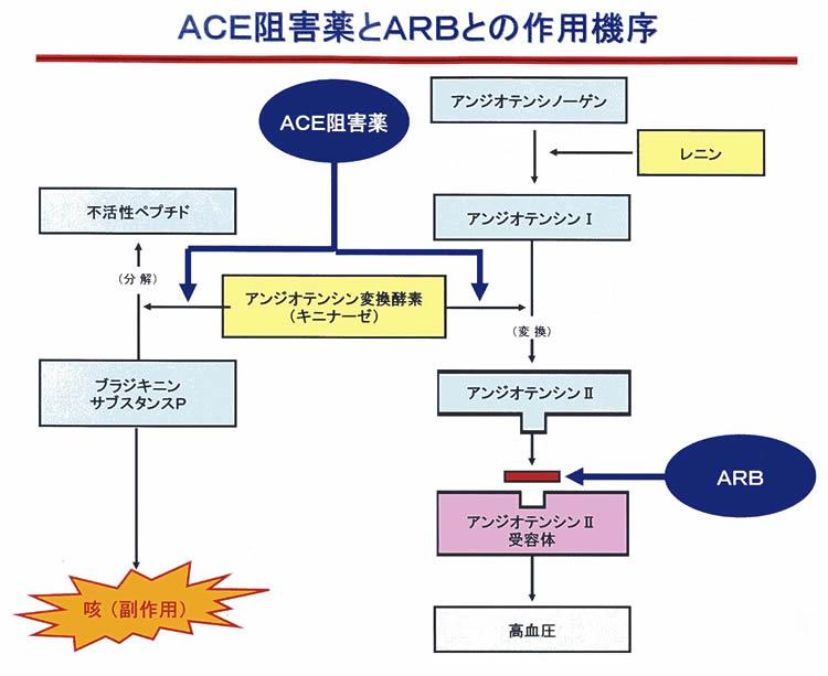 ACE阻害 ARB