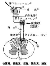 ichikaku sinndoukaku