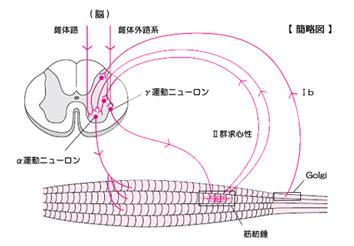 ganma neuron