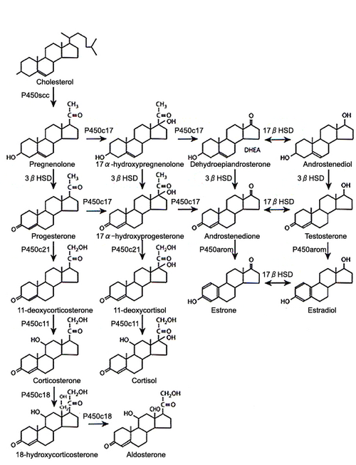 500px-Steroid_synthesis.png