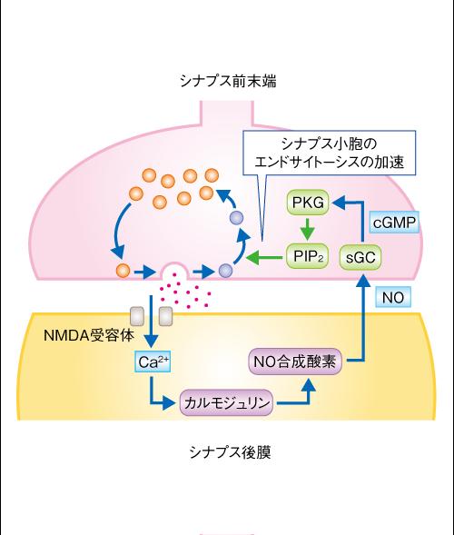 Takahashi-Neuron-12_5_9-Fig_2.png