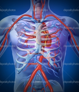 depositphotos_9078633-Human-Heart-Circulation-In-a-Skeleton.jpg
