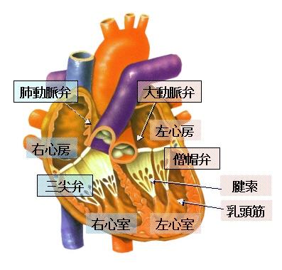 valve_fig1.jpg