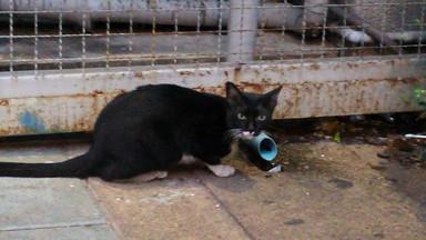 民主記念塔界隈 cat(10)