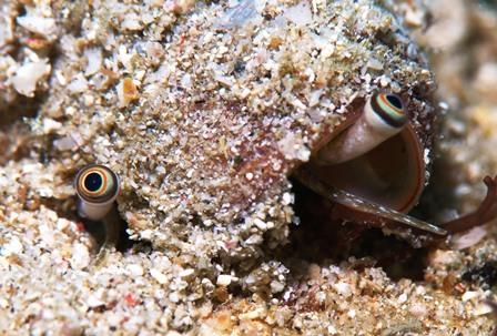 2011チャンバラガ貝の眼web