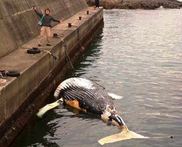 クジラとボクweb