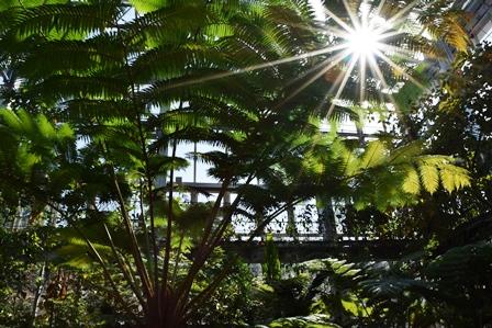牧野植物園の大温室web