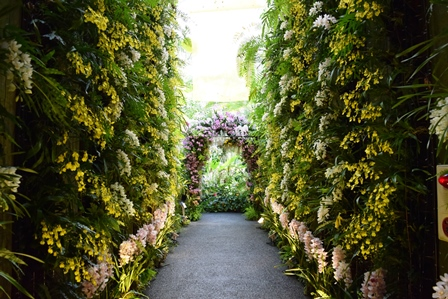 蘭のトンネルweb