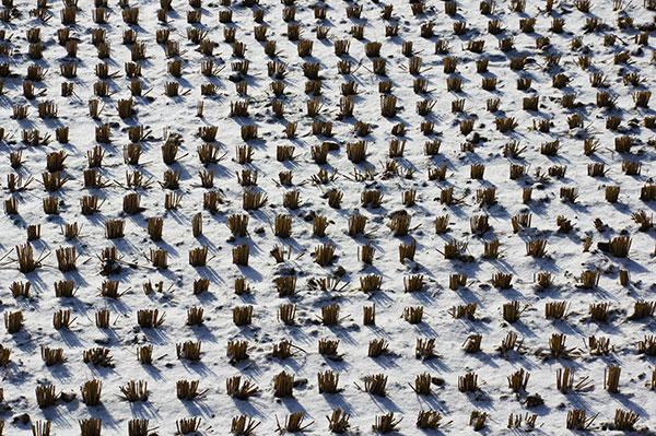 花巻市高松の冬の田んぼ