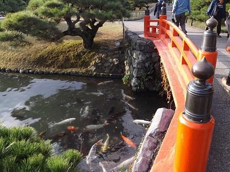 107梅林橋と錦鯉