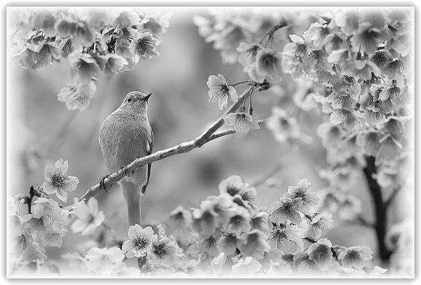 bird影_完成リサイズ