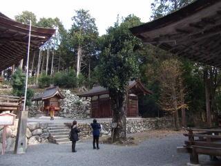 日吉大社多羅葉の木