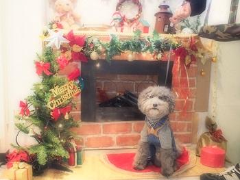 ジジさん家のクリスマス2015-1