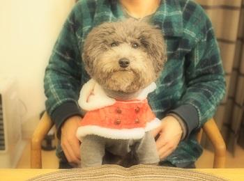 ジジさん家のクリスマス2015-3