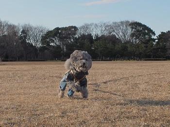 水元公園20160207-7
