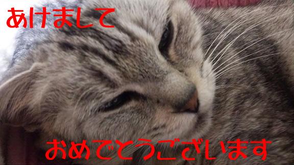 DSC_162701.jpg