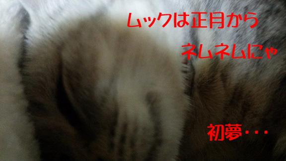 DSC_162801.jpg