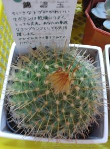 2015春ロハス 錦繍玉