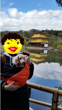 金閣寺とちゃんこ