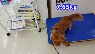 年末体重測定 犬太郎