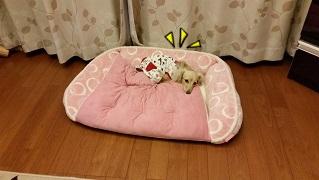 どでかベッド