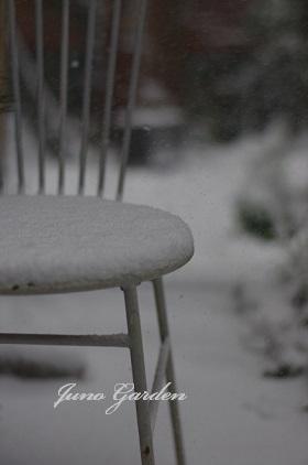 裏庭雪160120