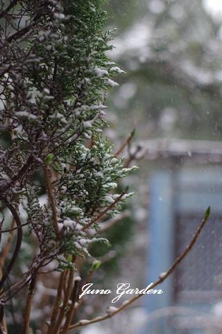 庭入口雪160120