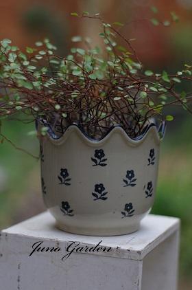 鉢植えワイヤープランツ160212
