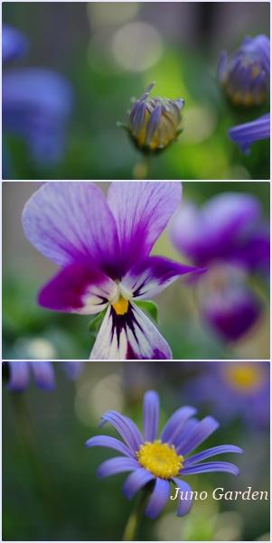 ブルーの花160217